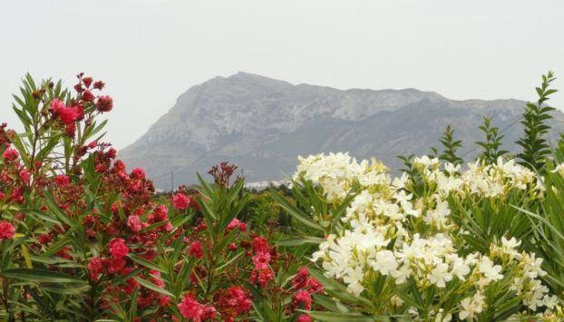 El Montgó desde la Vía Verde de Els Poblets a Denia.  Foto R.Puig