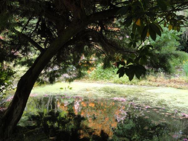 Jardín japonés en una mansión georgianas del  Herefordshire. Foto R.Puig.JPG