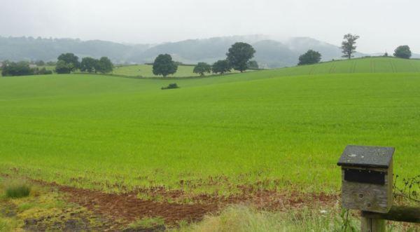 La verde Inglaterra. Foto R.Puig.JPG