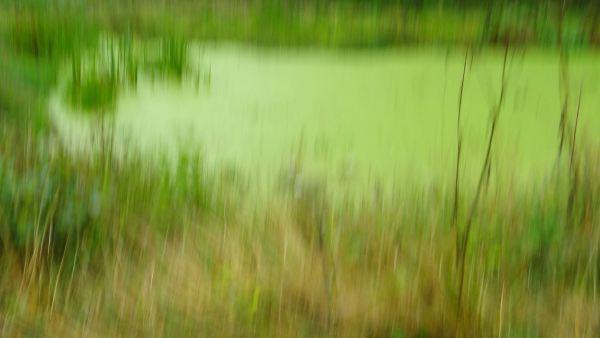 El estanque de Le Mesnil. Foto R.Puig