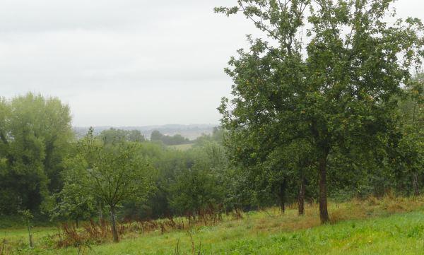 Los pomares de Le Mesnil.  Foto R.Puig