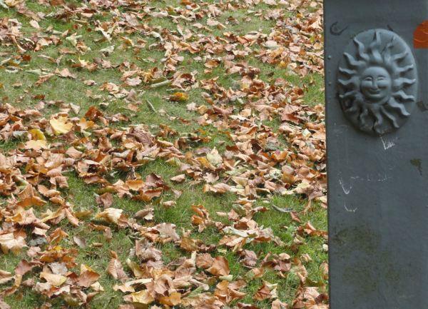 Tiempo de hojas caidas. Foto R.Puig