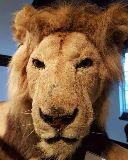 El león que rugió. Foto D. Papadopoulos