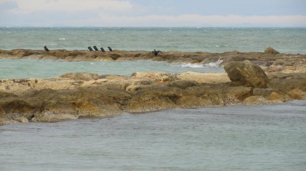 Con sigilo hacia los cormoranes. Foto R.Puig