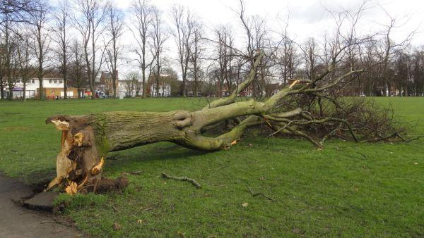 Efectos del huracán Doris en Victoria Park. Foto R.Puig