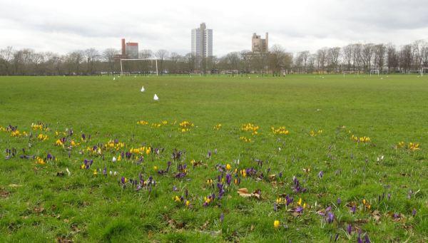 El Campus de Leicester desde Victoria Park. Foto R.Puig