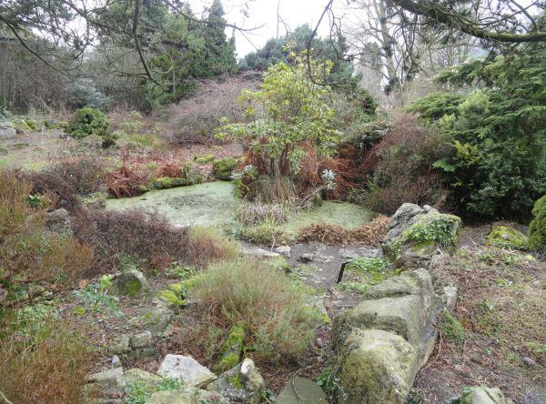 En el Botánico de Leicester. Vegetación de montaña. Feb.2017. Foto R.Puig