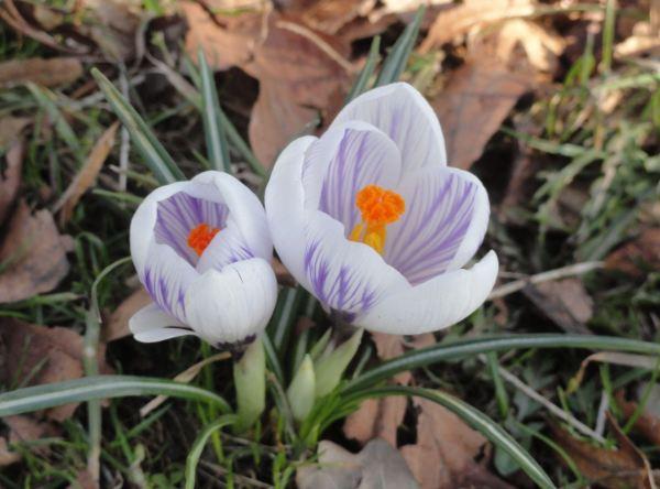 Veritatis simplex oratio. Foto R.Puig
