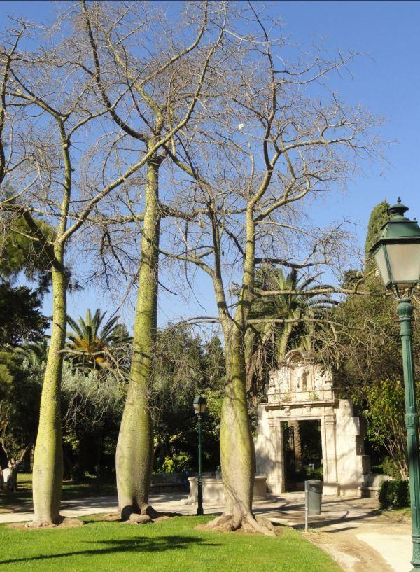 Jardines del Real. Valencia. Foto R.Puig