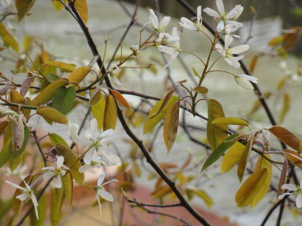 Surgen hojas surgen flores. Foto R.Puig