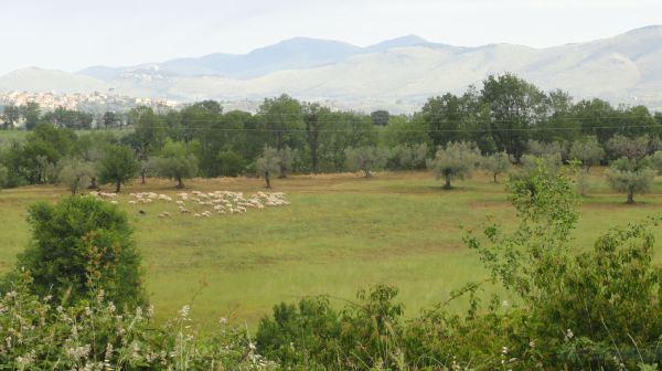 Campos de la Sabina Romana. Foto R.Puig