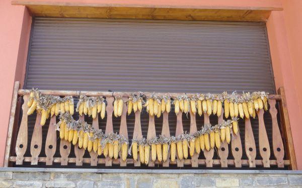 Las panochas al balcón. Vilac. Valle de Arán. Foto R.Puig