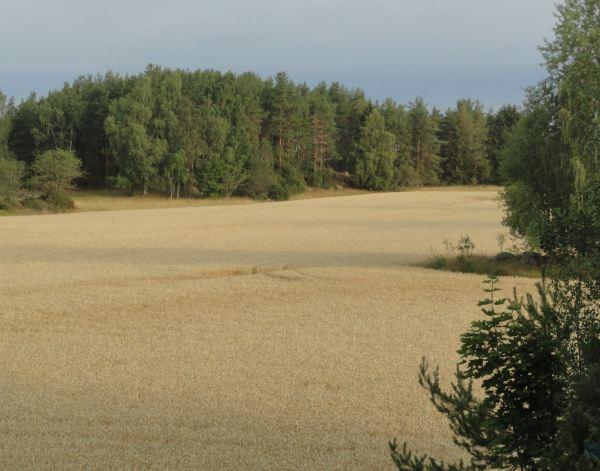 Desde la ventana en Hellby. Foto R.Puig