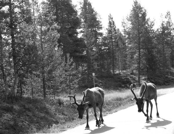 En el camino de vuelta Foto R.Puig