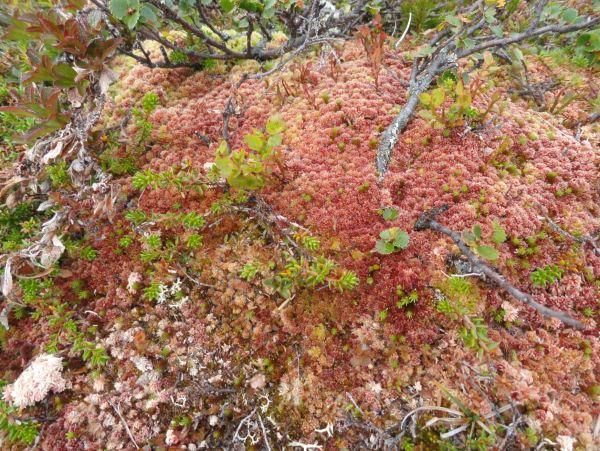 Los colores del musgo. Foto R.Puig