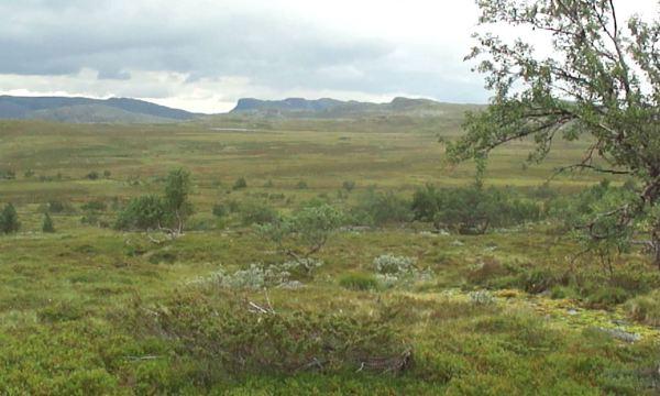 Por terreno pantanoso. Foto R.Puig