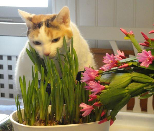 Bella en primavera. Foto R.Puig