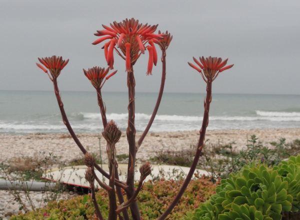 Orilla florida. Foto R.Puig