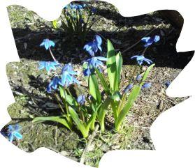 Primavera. Foto R.Puig
