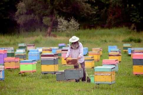 Colmenas en Lekit. Azerbaiyán. Foto FAO