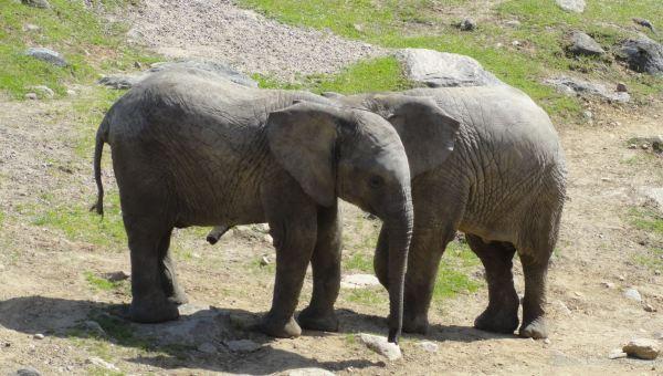 Calma chicha. Zoo de Borås. Foto R.Puig