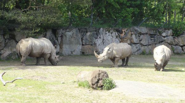 No muy bien avenidos.. Zoo de Borås. Foto R.Puig