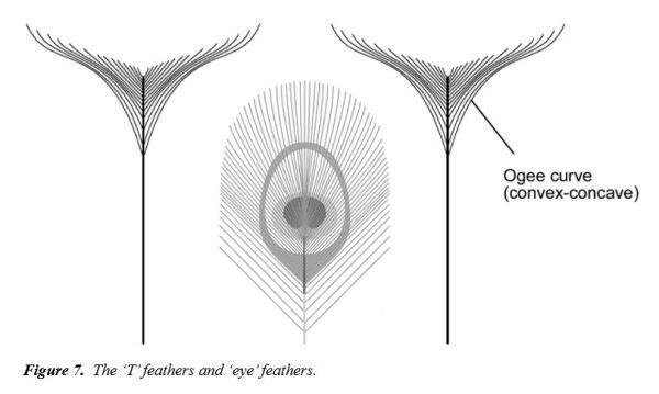 Las plumas del pavo real. Fuente Stuart Burgess. TJ 15(2) 2001