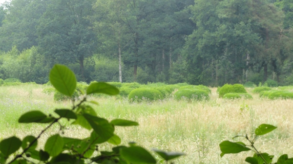 Verde Flandes. Foto R. Puig