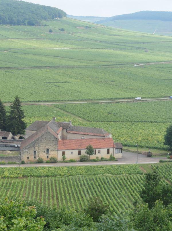 iñedos de Côte-d'Or en Borgoña. Foto R.Puig
