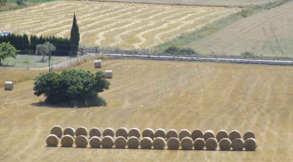 Montuiri. Después de la cosecha. Foto R.Puig