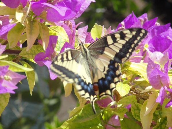 Montuiri. En el jardín de Can Moio.Foto R.Puig