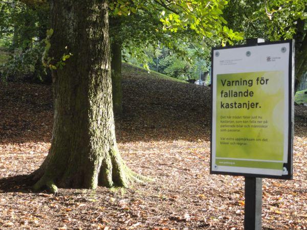 Advertencia por caída de castañas. Foto R.Puig