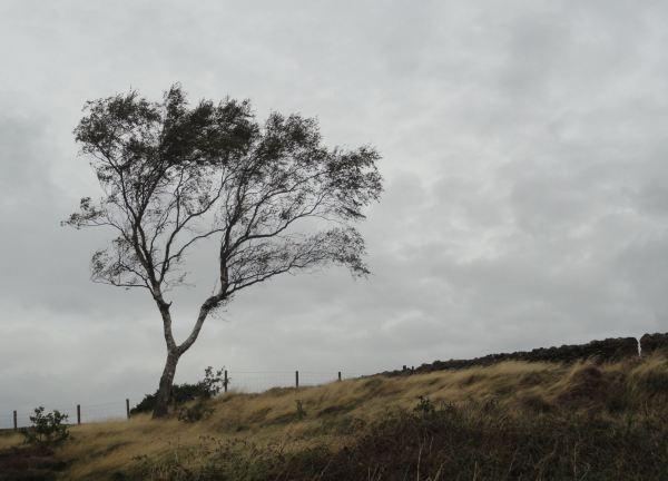 El día se ha nublado en Beacon Hill. Foto R.Puig