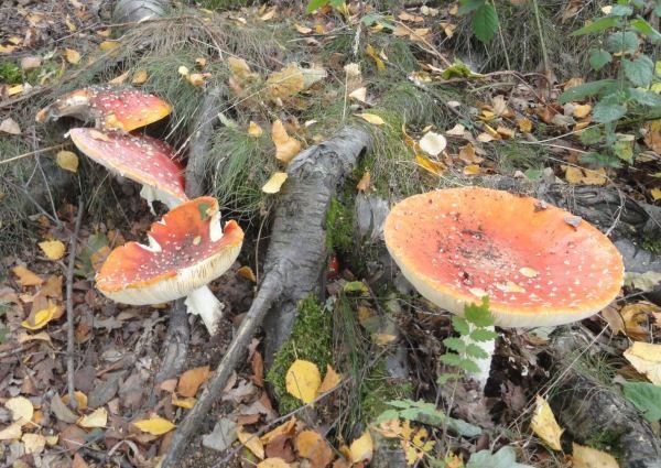 Paraguas para los enanitos del bosque. Foto R.Puig