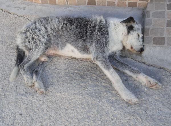 Siesta canina en la Vall d.Ebo. Foto R.Puig