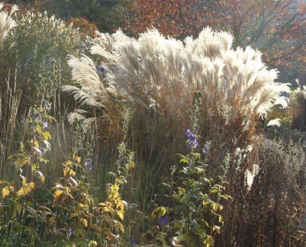 En el Jardín botánico de Gotemburgo. Foto R.Puig