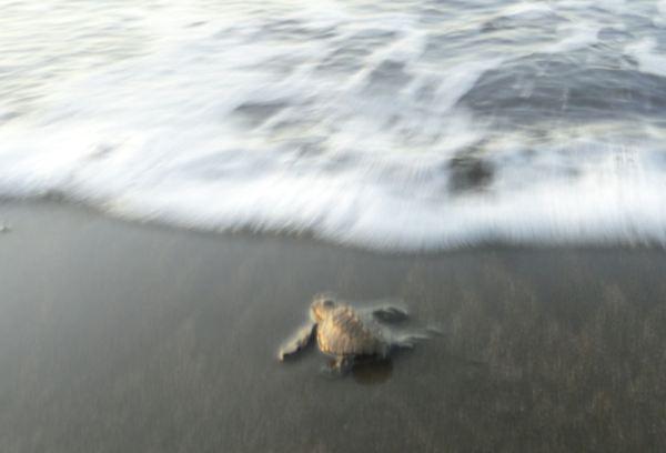 Con la ayuda de la ola. Foto R.Puig