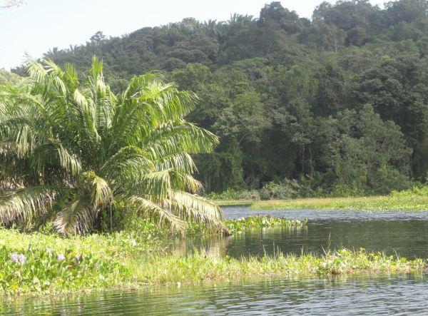 Por el lago Gatún. Panamá. Foto R.Puig