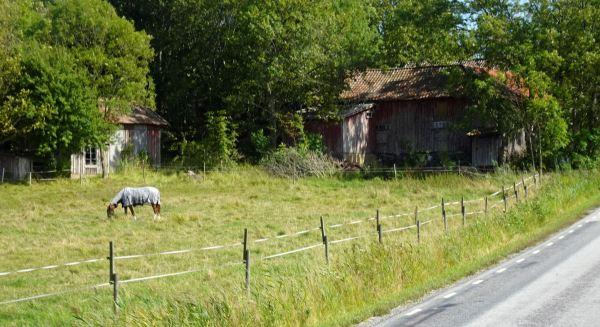 Camino a Pilane. Foto R.Puig
