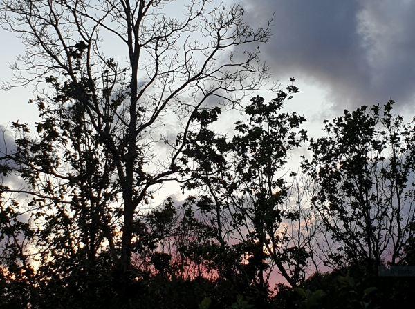 La tarde se alarga en noche. Foto R.Puig