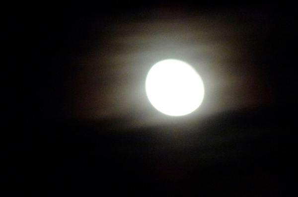 Luna en la Almadraba. Foto R. Puig