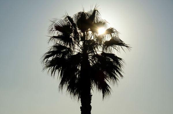 Sol con palmera. Foto R.Puig