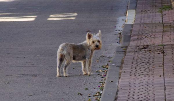 Tantos canes como habitantes. Els Poblets. Foto R.Puig