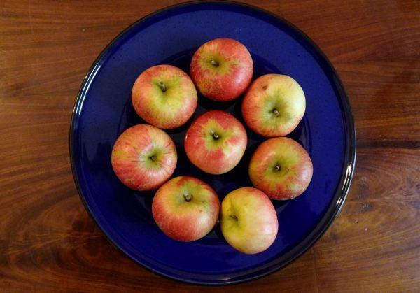Manzanas en un círculo azul. Foto R.Puig