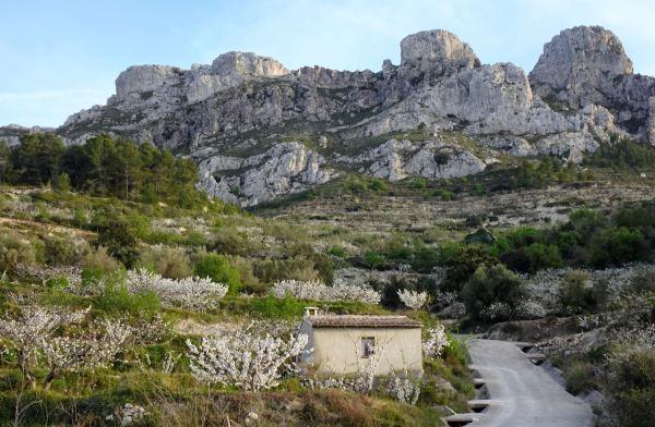 Cerezos en flor y los Runals del Pinyol Gros. Foto R.Puig