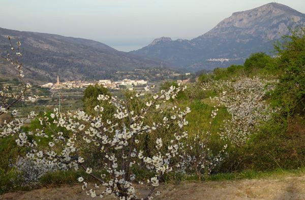 Cerezos y Alpatró. En la lejanía Benirrama, su castillo, y el Miserat y el mar. Foto R.Puig