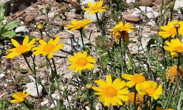 Flores. Foto R.Puig