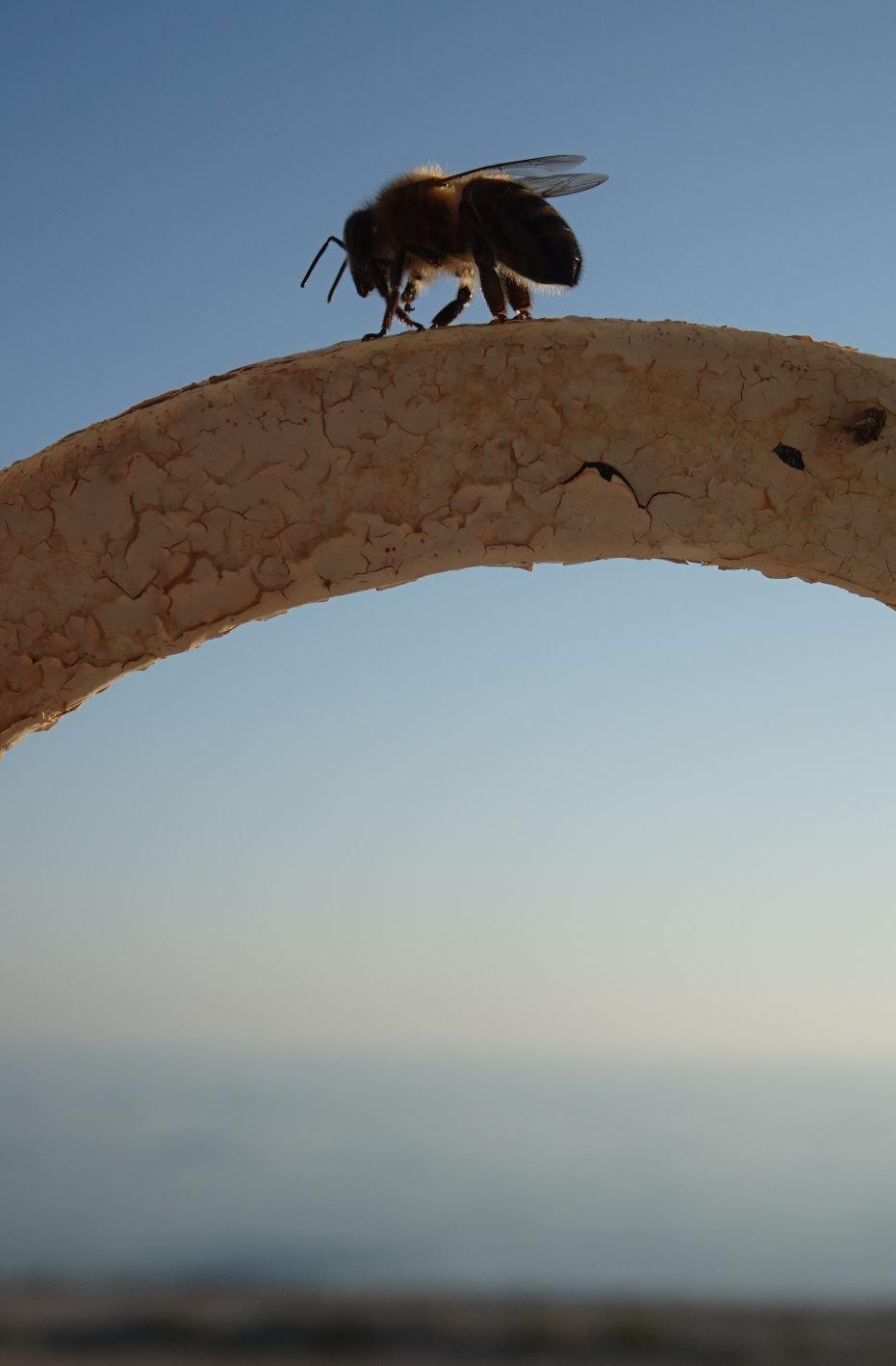 Visitante del solsticio. Foto R.Puig